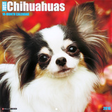 Chihuahua Rules - 2016 Calendar Calendars