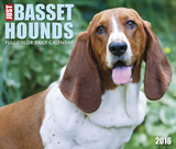 Just Basset Hounds - 2016 Boxed Calendar Calendars