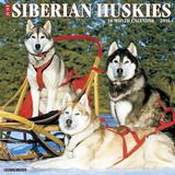 Siberian Huskies - 2016 Calendar Calendars