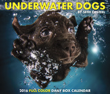 Underwater Dogs - 2016 Boxed Calendar Calendars