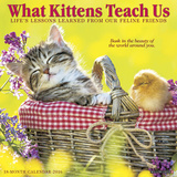 What Kittens Teach Us - 2016 Calendar Calendars