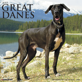 Great Danes - 2016 Calendar Calendars