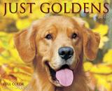 Just Goldens - 2016 Boxed Calendar Calendars