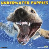 Underwater Puppies - 2016 Calendar Calendars