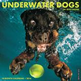 Underwater Dogs - 2016 Calendar Calendars