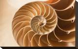 Fibonacci Pattern in a Shell Stretched Canvas Print