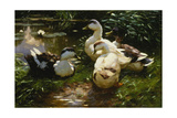 Ducks on a Pond with Waterlilies Giclee Print by Alexander Koester