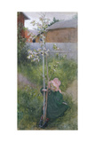 Apple Blossom (Appelblom), 1894 Giclée-Druck von Carl Larsson