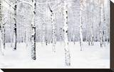 Walking in a Winter Stretched Canvas Print by Parker Greenfield