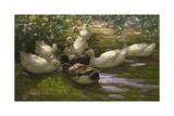 Ducks under Birch Twigs Giclee Print by Alexander Koester