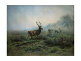 Pack of Deer in Foggy Mountain Landscape, 1875 Giclee Print by Maria-Rosa Bonheur