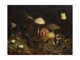 Reptiles, Mushrooms and Butterflies Gicléetryck av Otto Modersohn