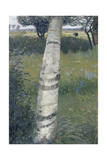 Birch Tree in Bloomy Landscape, 1903 Giclee Print by Otto Mueller