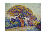 The Pine Tree at St, Tropez, 1909 Reproduction procédé giclée par Paul Signac