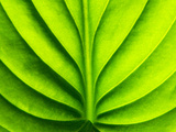 Green Design Photographic Print