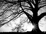 Old Tree Photographic Print by  PhotoINC
