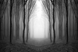 Dark Woods Photographic Print by  PhotoINC