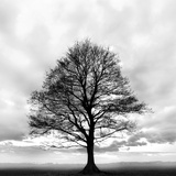 Great Tree Photographic Print