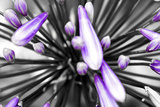 Purple Flower Photographic Print by  PhotoINC