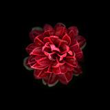 In Red Reproduction photographique par  PhotoINC