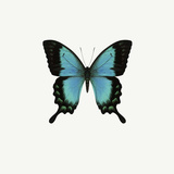 Papillon bleu Reproduction photographique par  PhotoINC