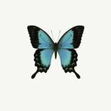 Blue Butterfly Stampa fotografica di  PhotoINC