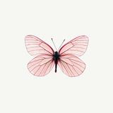 Papillon rose Reproduction photographique par  PhotoINC