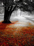 Autumn Leafs Photographic Print