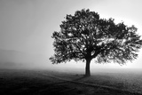 Tree in Mist Photographic Print