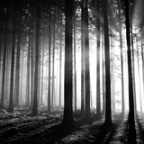 Wood Light Photographic Print