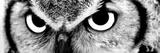 Ugle Fotografisk tryk af  PhotoINC