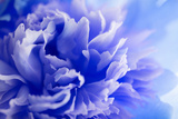 Blue Flower Photographic Print by  PhotoINC