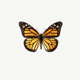 Mariposa amarilla Lámina fotográfica por  PhotoINC