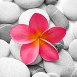 Zen Flower Photographic Print