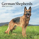 German Shepherds - 2016 Calendar Calendars