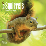 Squirrels - 2016 Mini Wall Calendar Calendars