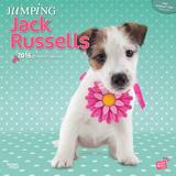 Jumping Jack Russells - 2016 Calendar Calendars