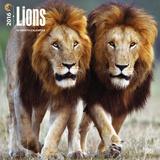 Lions - 2016 Calendar Calendars