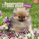 Pomeranian Puppies - 2016 Mini Wall Calendar Calendars