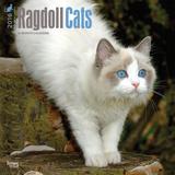 Ragdoll Cats - 2016 Calendar Calendars