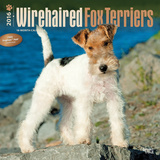 Wirehaired Fox Terriers - 2016 Calendar Calendars