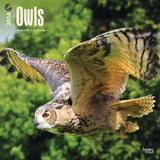 Owls - 2016 Calendar Calendars