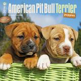 American Pit Bull Terrier Puppies - 2016 Calendar Calendars