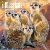 Meerkats - 2016 Calendar Calendars