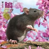 Rats - 2016 Calendar Calendars