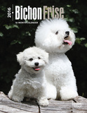 Bichon Frise - 2016 Engagement Calendar Calendars