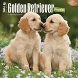 Golden Retriever Puppies - 2016 Calendar Calendars