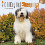 Old English Sheepdogs - 2016 Calendar Calendars
