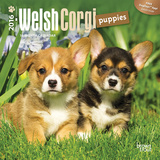 Welsh Corgi Puppies - 2016 Mini Wall Calendar Calendars