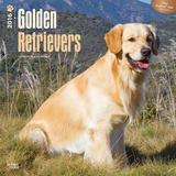 Golden Retrievers - 2016 18 Month Calendar Calendars